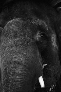 For elephants in Nepal's Sauraha, humane treatment is a cry in the wilderness