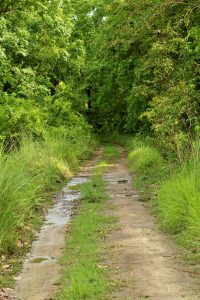 Bardia National Park: A Lullaby of Crunching Bones