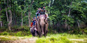 UN renews danger list warning, tells Nepal not to open new roads through Chitwan National Park