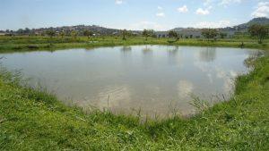 Three drown in Morang pond