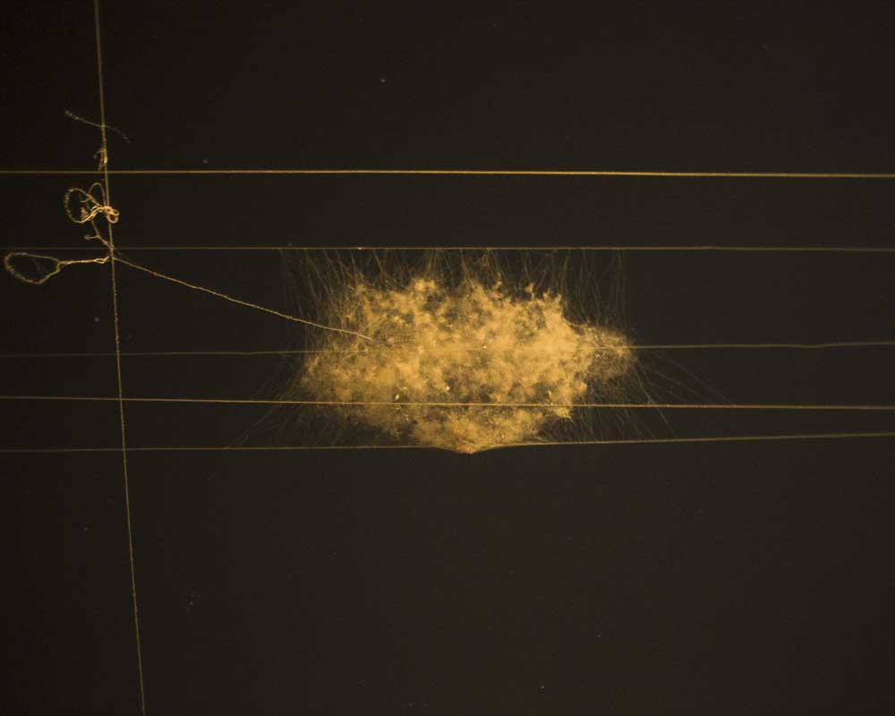 A huge chunk of cobweb in the electricity wire.