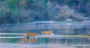 Bardiya National Park to reopen from Friday