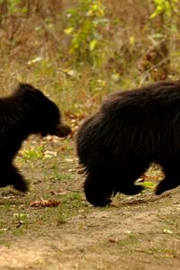 Why never, ever go near a mama bear when she's with her cub
