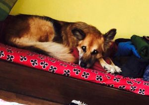 The story of Maya: Why puppy mills in Kathmandu need to stop