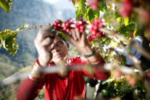 A successful shot in the dark: The story of Kathmandu's own coffee