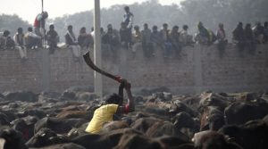 To kill or not to kill: Why Nepal debates whether to continue animal sacrifice every Dashain