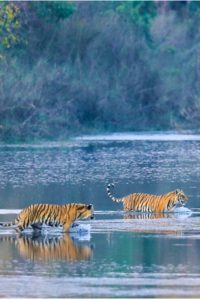 At Nepal's western frontier, wilderness beckons