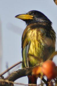 Birds at Shivapuri: Perfect companions on a lazy day