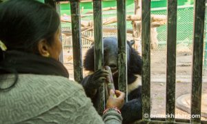 It's love that counts: Why life and death of captive animals moves these zookeepers?
