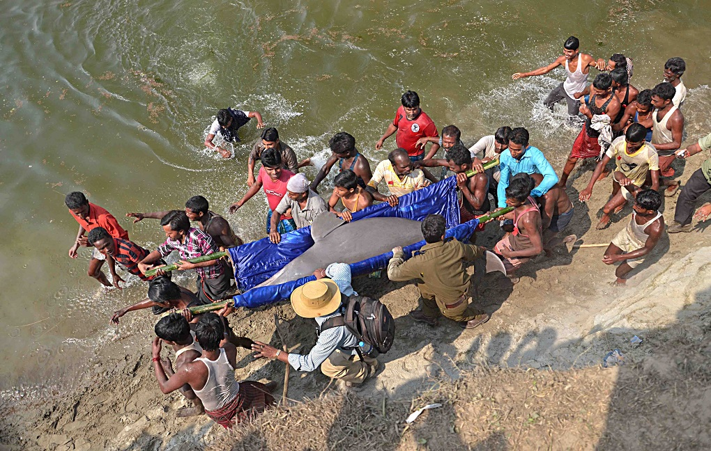 Climate change threatens dolphin habitats in Ganga