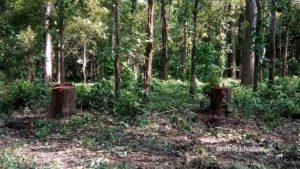 Experts demand alternative to scientific forest management asap