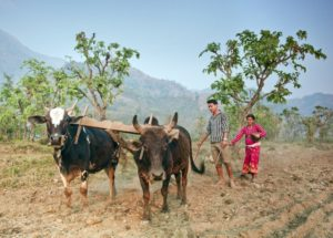 Can agriculture be profitable and sustainable?