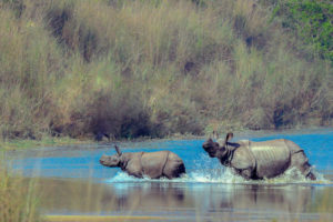 Nepal, in a bid to create a new rhino population, pauses to take stock