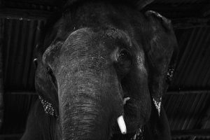 World Elephant Day: How tourism torments tuskers in Nepal