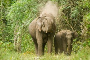 Jhapa teen dies after elephant attack
