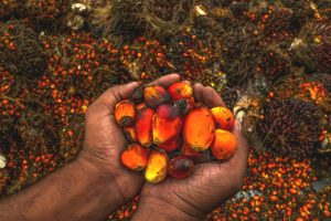 Palm Oil: Know more about the pros and cons of Nepal's biggest 'export'
