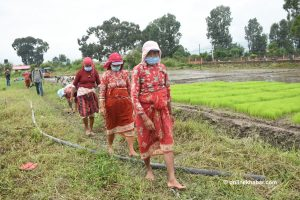 Covid-19 deepened food insecurity in Nepal: WFP