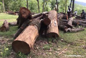 Govt scraps controversial Scientific Forest Management programme