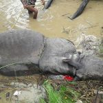 Nepal's Chitwan National Park reports first rhino poaching incident after 3.5 years