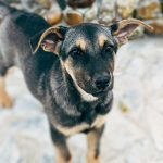 These Instagram pages in Nepal help dog lovers adopt rescued puppies