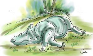 2 rhinos found dead in Chitwan