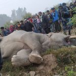 Human-elephant conflict in Nepal:  7 things you should know