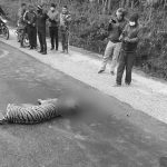 Stakeholders are concerned as more wild animals get spotted on Nepal highways