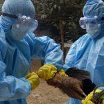Kathmandu bird flu: 15,000 chickens killed