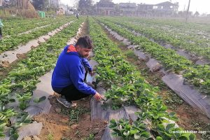 Returning home from the US to cultivate his dreams–and, strawberries