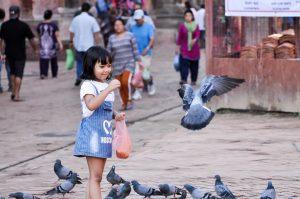 Bird watching in Kathmandu's urban jungle: A trip down memory lane