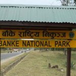 Untimely deaths of wildlife in Banke National Park on the rise