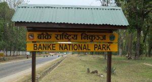 High alerts in Banke after 'killer' tiger escapes from enclosure