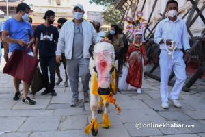 Nepal worships these 7 animals every year, with special festivals for most