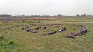 Mass vulture deaths remind Nepal conservationists of past challenges that are not really past