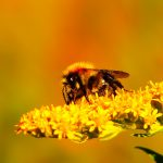 Top 8 surprising facts about mad honey that is found in Nepal also