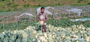 Kathmandu lockdown: Makawanpur farmers throw vegetables for want of market