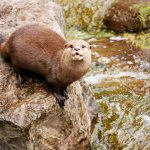 World Otter Day: Why Nepal needs to conserve otters