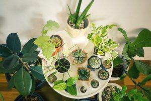 8 best indoor plants for Nepal's urban households