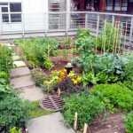 How to start rooftop farming in Nepal? A step-by-step guide