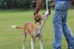 Pet-keeping is popular in urban Nepal. Here are tips to take care of them