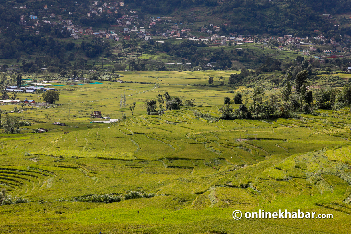 Climate change has affected all major crops of Nepal including rice.