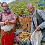 Apple farming is changing farmers' lives in Jumla of remote Karnali