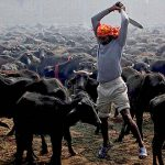 Animal sacrifice in Nepal in the name of religion: Legal and moral perspectives